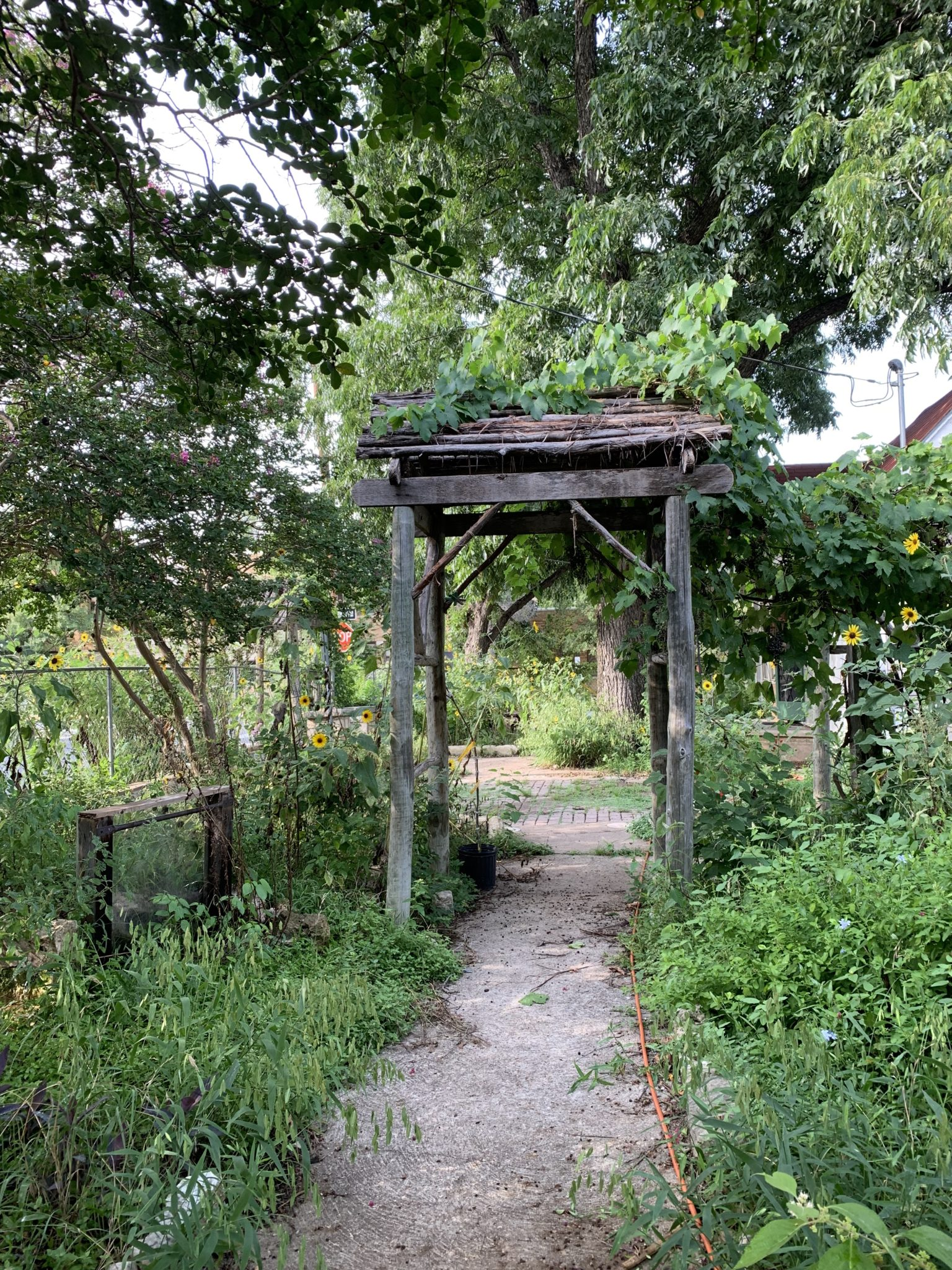 playing with purpose in the garden